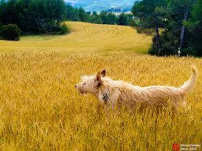 Photo: Alai - Fotografies de Ferran Cerdans Serra de Llibres Artesans, Santpedor
