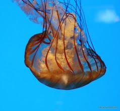 Photo: (Year 3) Day 23 - Jelly Fish #3