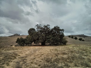Photo: First visit to this old oak.