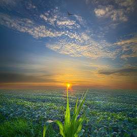 God Speed by Phil Koch - Landscapes Prairies, Meadows & Fields ( love, country, mood, vertical, clouds, office, scenic, hope, life, colors, beautiful, weather, season, lines, meadow, sky, wisconsin, art, emotions, living, journey, natural, nature, inspirational, inspired, portrait, heaven, horizons, morning, horizon, environment, outdoors, field, sunset, earth, dawn, travel, serene, landscape, photography,  )