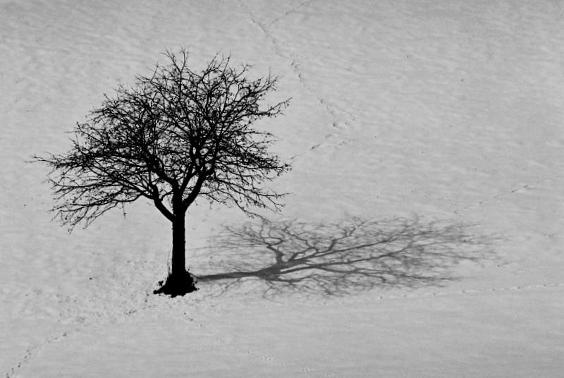 ombra sulla neve di paolo-spagg