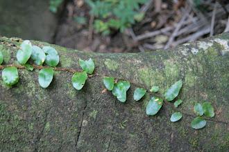 Photo: Ja puiden päällä kasvoi usein muuta vihreää
