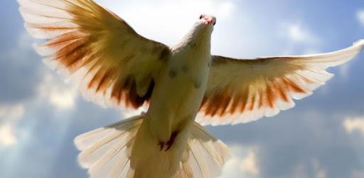 Flying Birds Live Wallpaper Apps On Google Play
