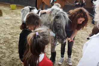 Photo: Il cavallo - un caro amico