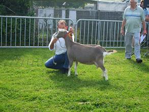 Photo: Klasse 1: 1 jarige toggenburger geiten. 1c. Marry 108 v.d. Hoogendijk.