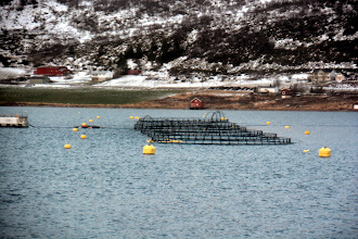 Photo: And back to sea after a 15 minute stop..passing a fish farm