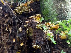 Photo: More fungi