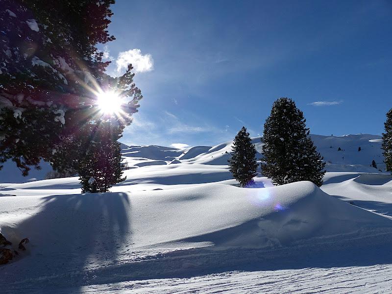 Orme nella neve di Rosa