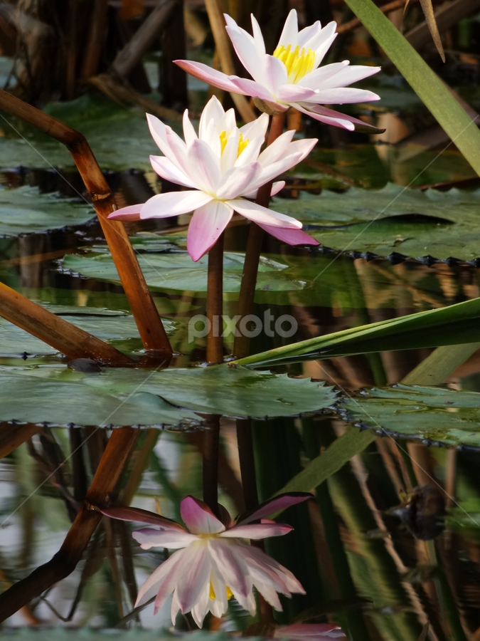 by Nani Garu - Nature Up Close Flowers - 2011-2013