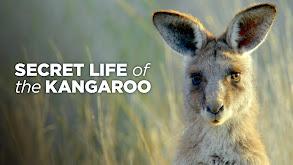 Secret Life of the Kangaroo thumbnail