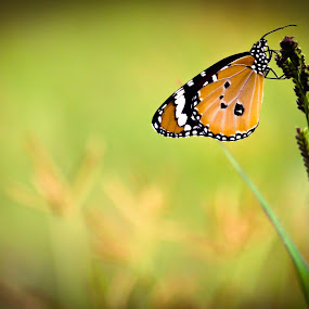by Uday Shankar - Animals Insects & Spiders