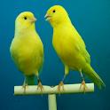 Kanarya Kuşu Sesleri, Zil Sesi icon
