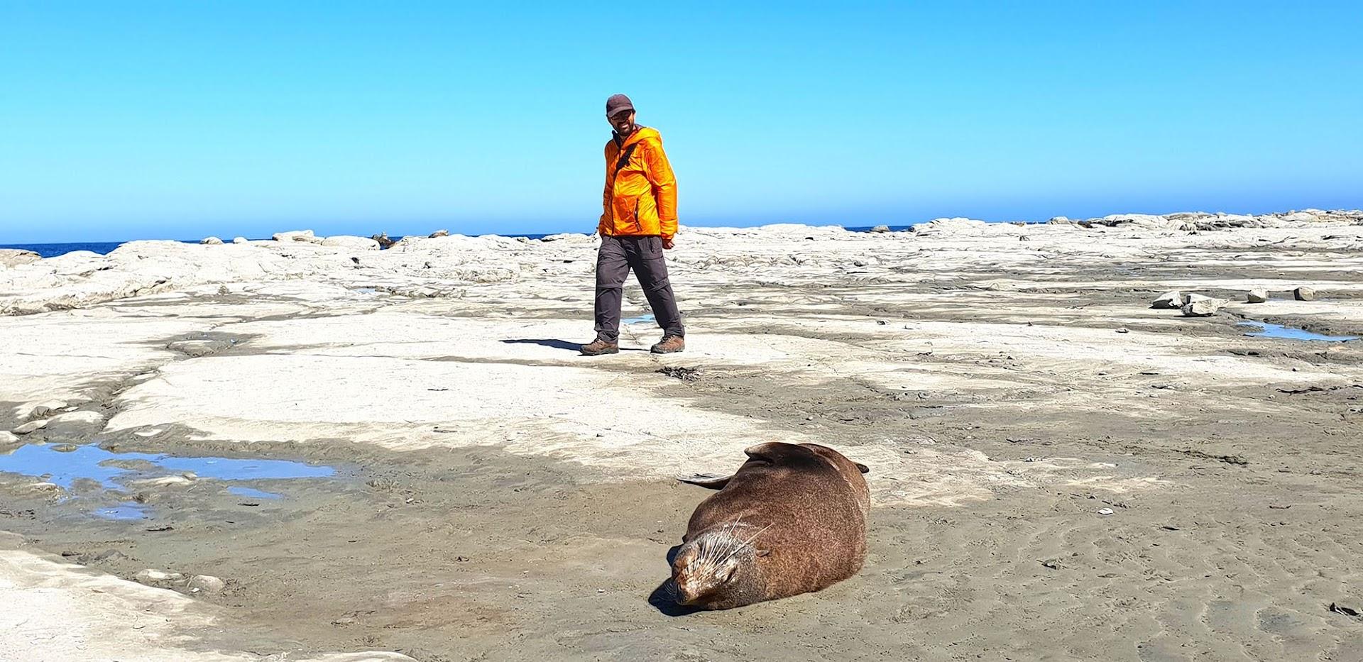 VISITAR KAIKOURA, a capital de observação de baleias da Nova Zelândia