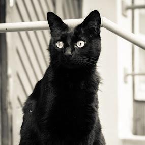 by Forika Helga - Animals - Cats Portraits