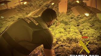 Cultivo indoor de marihuana