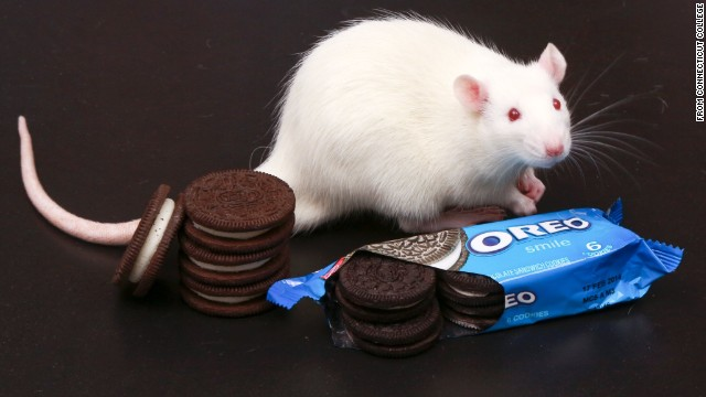 Oreos as 'addictive' as cocaine in lab rat study