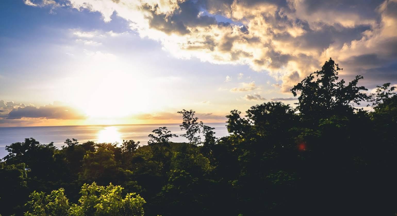 Harmonie Tropical