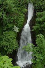 Photo: Shepperds Dell Falls
