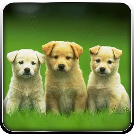 Super Puppy Adoption 3D Game Android APK Download Free By Fun Games Studio 3d