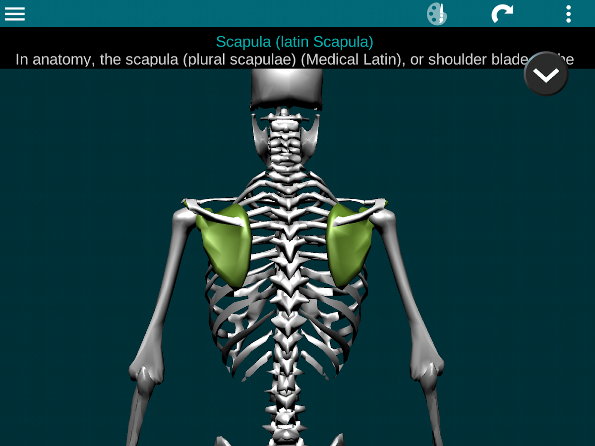 Bones Human 3D (anatomy)- screenshot