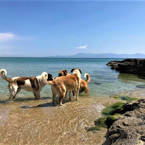 Meeting in the sea by Elenka Smilenova - Animals - Dogs Playing ( pet dogs sea animals )