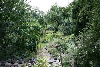 """Photo: Viel Grün, ein Bachlauf, Blick in den Obstgarten von der Terrasse des """"Storchennests"""" aus."""