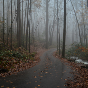 by Chuck Hagan - Landscapes Forests