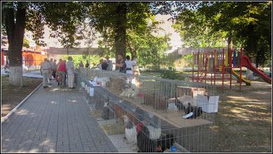 Photo: Din Parcul Tineretului - 2017.08.11