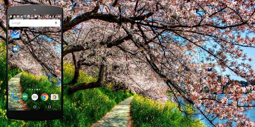 春天裡生活壁紙