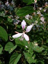 Photo: Magnolias