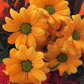 Blumenstrauß 1 by Marianne Fischer - Flowers Flower Arangements (  )