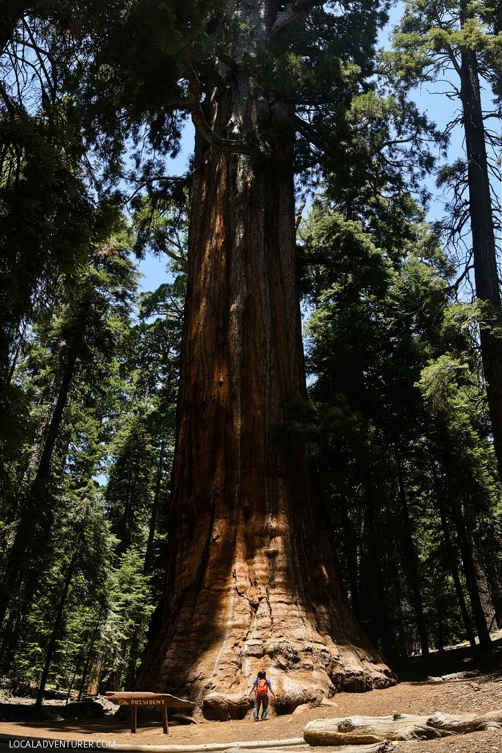 Sequoia National Park (15 Popular Weekend Trips from San Diego).