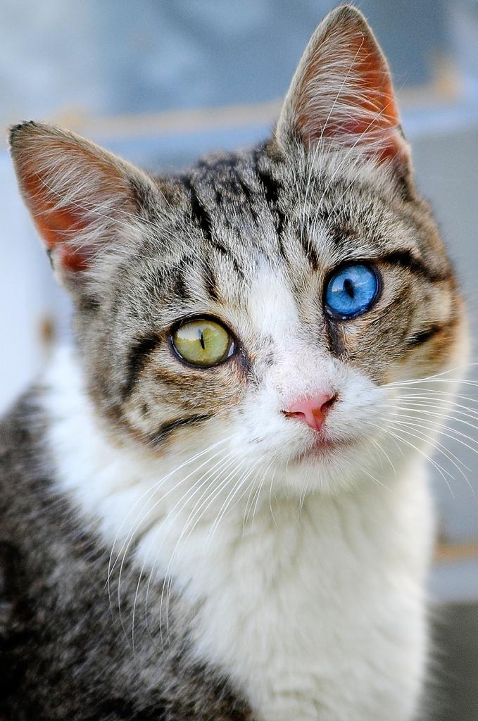 L'occhio del gatto di Marchingegno