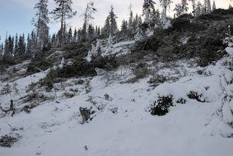 Photo: Efter Sveaskogs slutavverkning för knappt två veckor sedan. Detta är resterna av den urskogsartade gammelskogen på den branta sluttningen upp mot toppen av berget.