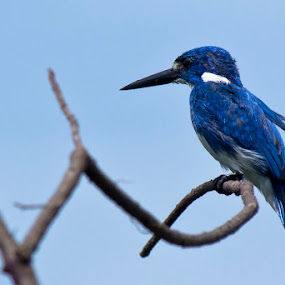 Relaxed by Rusman Budi Prasetyo - Animals Birds ( bird, wildlife,  )