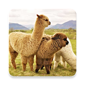 Alpaca Sound Collections ~ Sclip.app Android APK Download Free By Sclip.app