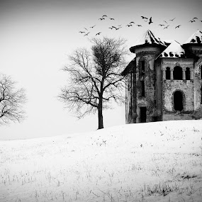 The Mystery Castle by Bogdan Negoita - Illustration Products & Objects ( mistery, winter, tree, snow, castle, birds, black and white, b and w, landscape, b&w, monotone, mono-tone )