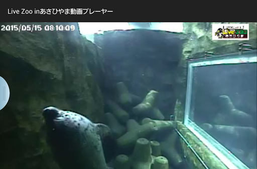Live Zoo in あさひやま 動画プレイヤー