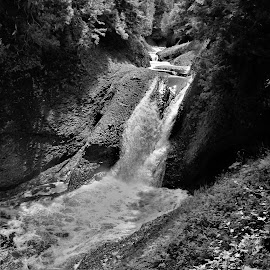 Black River Gorge by Robert C. Walker - Black & White Landscapes ( water, michigan, black and white, gorge, falls, trees, canyon, rock, landscape, ottawa national forest, river )
