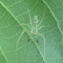 Ghost Spider male