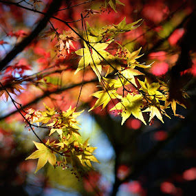 Spring leaves by Rhonda Kay - Nature Up Close Trees & Bushes (  )