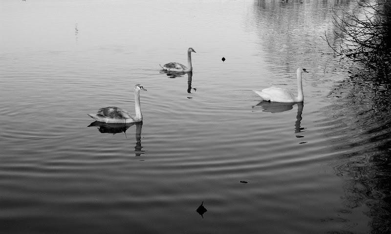Nel lago.... di Wilmanna