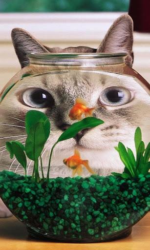 おかしい猫の壁紙とテーマ