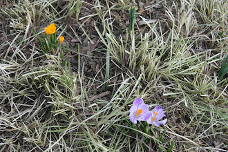 Photo: New spring flowers along the Brooklyn Heights Promenade.