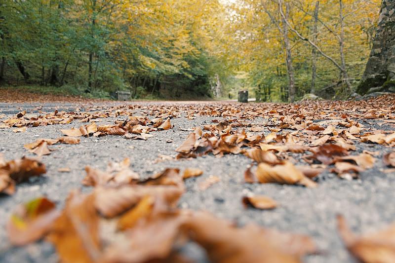 Leaves di marco_frosini_
