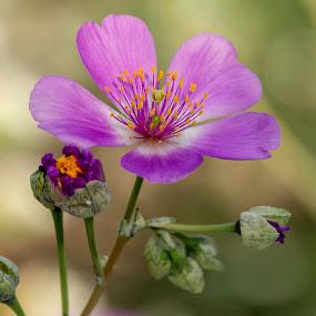 by Margie Troyer - Flowers Single Flower (  )