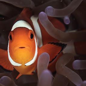What?? by Steven Tessy - Animals Fish ( underwater, fish )