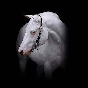 WHITE HORSE by Alessandra Cassola - Animals Horses ( #horse, #white horse, #animal, #beautiful horse )