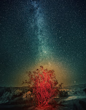 Photo: Milky Way over the Burning Bush  I took this photo in Death Valley one evening. The bush is red and mysterious because of a bit or light-painting with my headlamp. My neck got a bit tired from multiple tries. That glow around it? I don't really know… maybe a bit of the dust from the desert caught the red light. Either way, I like how everything looks all funky and zen.