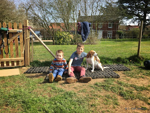 Photo: Charlie and Jack (Woody Labradors 'brothers') with their favourite Beagle, Jess